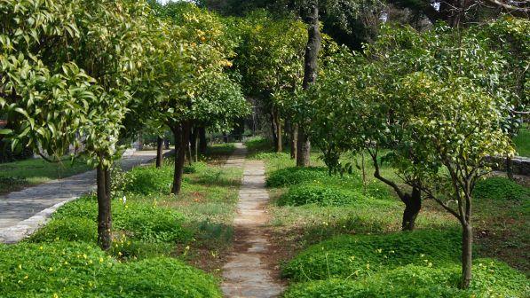 Diomedous Botanical Gardens flourish rock road