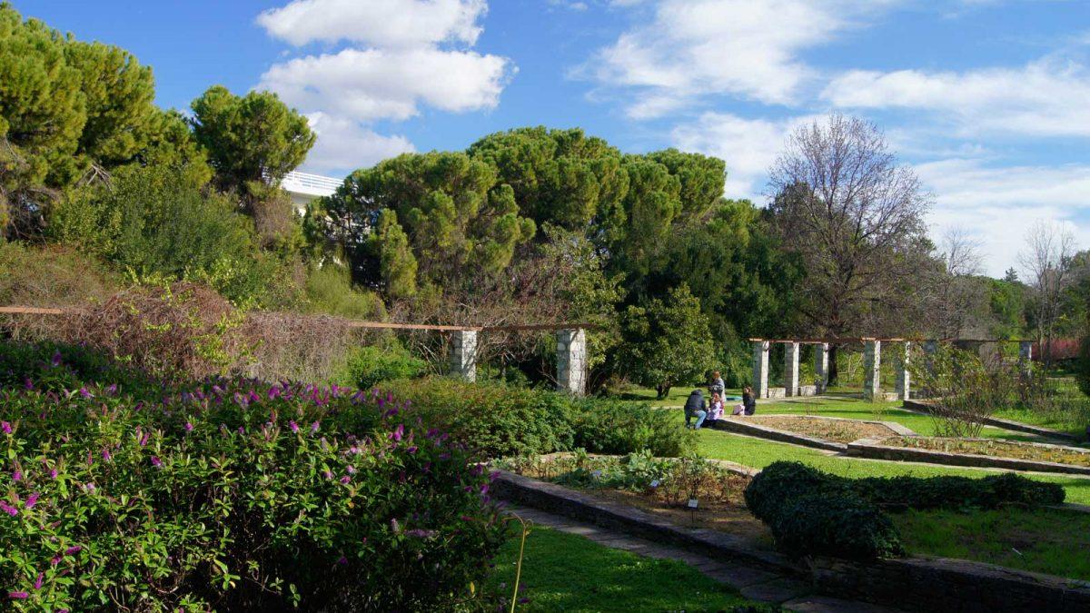 Flora, Attica, Unique, Plants